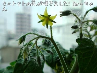 m_201005231539334bf8cda5e61c1.jpg
