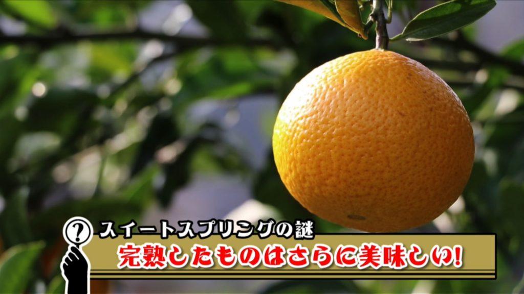 0116江越ホームズ完パケ 010557;10